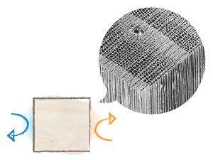 木の細胞図